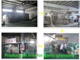 production line for garlic granules